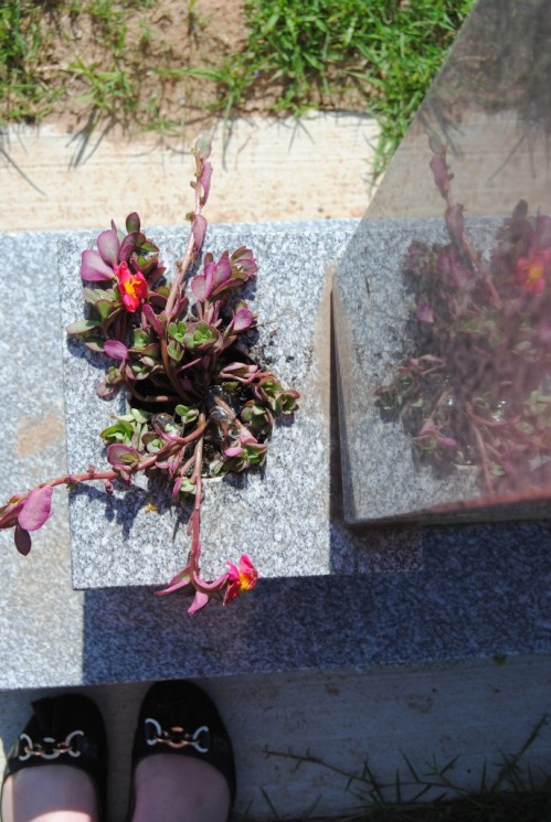 and replanted the moss into the little vase on the side of her headstone.