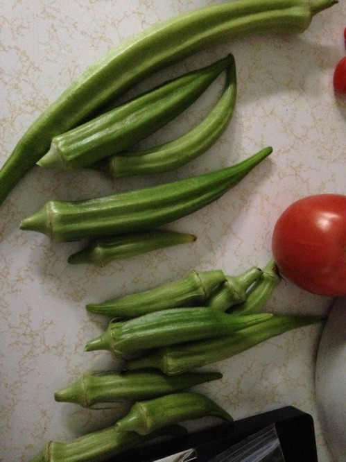Our garden is producing lots of okra and cucumbers now. We are getting a few tomatoes and fewer peppers than we had hoped for. But John and I are always thrilled with whatever grows and produces.