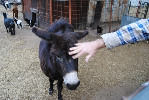 Jarred said he liked the name Dolly for his donkey. I think that's a perfect name for her, what do you think?