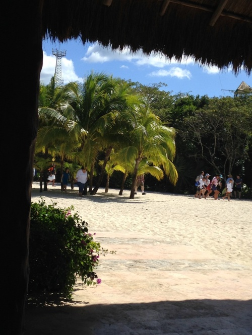 Lovely view of the palm trees and the beach.